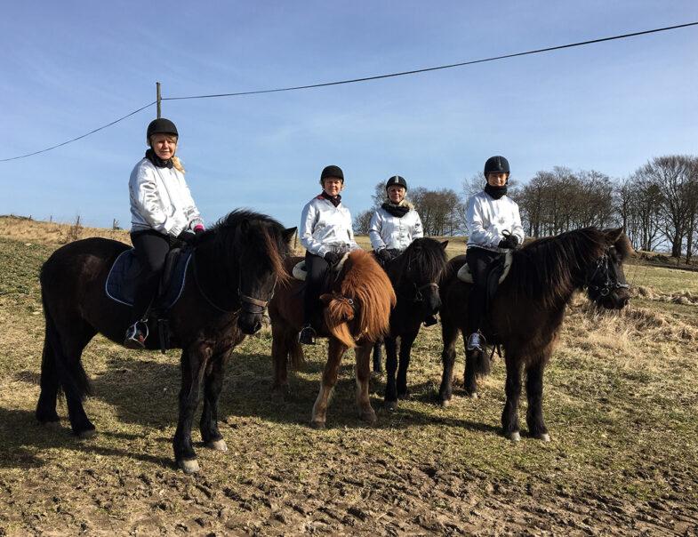 Islandshästar på Bjärehalvön