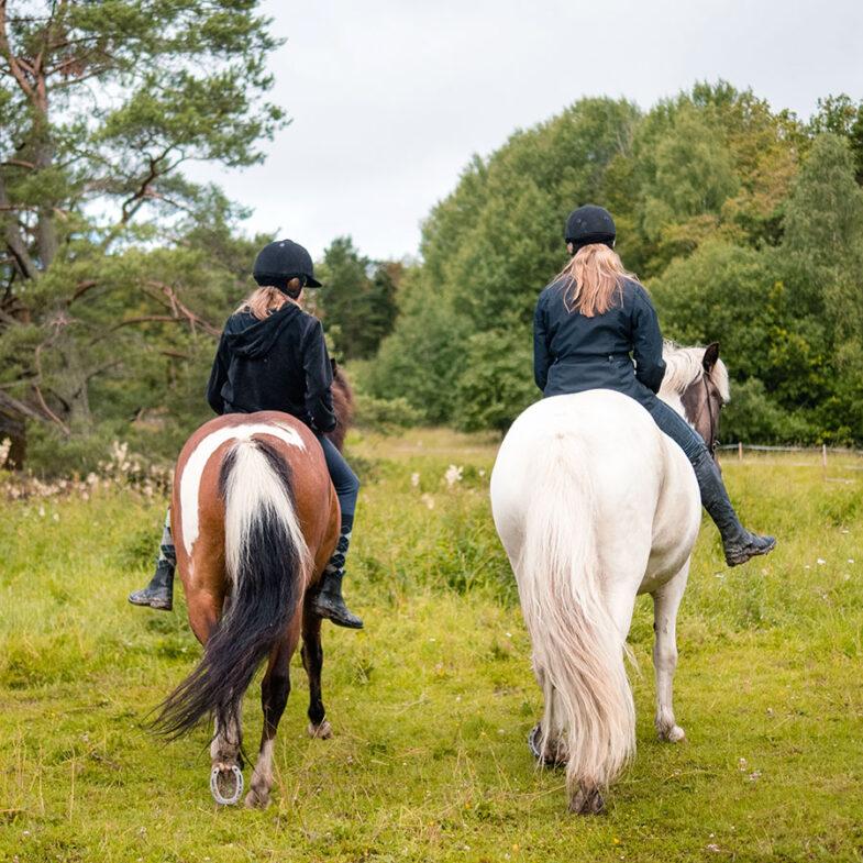 Islandshästar i Båstad