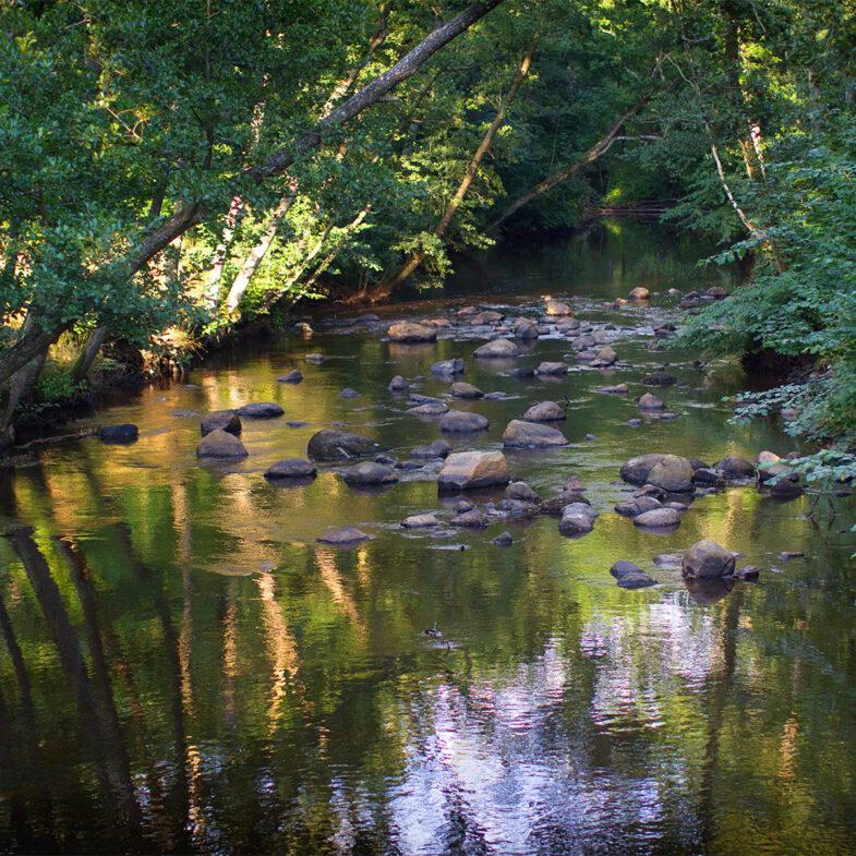 Stensån i Malenskogen, Båstad